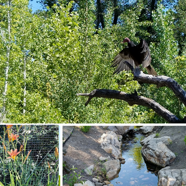 Tracy Aviary landscape, trees, native flowers and streams
