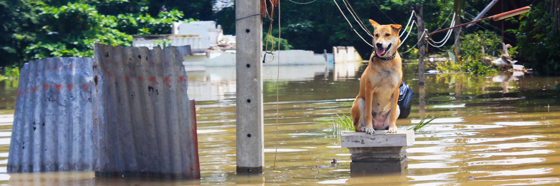 Planning for Your Pets during Evacuations