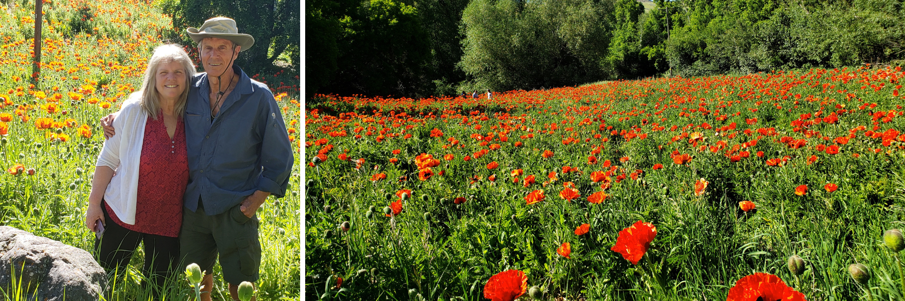 The Poppy Fields at Mantua and Alpine
